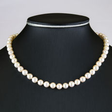 18 kt Yellow gold – Choker with box lobster clasp – Akoya Pearls – Length 48.50 cm