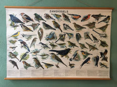 School poster songbirds complete with booklet
