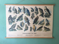 School poster Diurnal birds of prey and owls