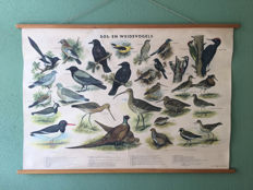 School poster forest and meadow birds