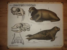Two old Dybdahl's zoological wall posters