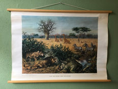 School poster On the edge of the Kalahari