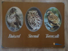 Two old school posters with birds, little owl, buzzard, kestrel, pied avocet, black-tailed godwit and lapwing.