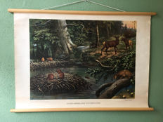 School poster North American forest inhabitants