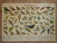 "Beautiful old school poster with  57 ""Songbirds"" in a folder with explanatory booklet associated with the school poster."