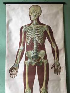 School poster anatomy of the nervous system