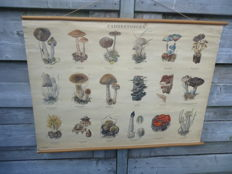 Beautiful school poster with mushrooms