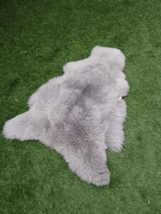 Large, thick and supple Sheepskin - Ovis aries - 100 x 80cm