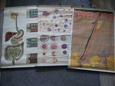 3 Medical old school posters: digestion, skin, blood cells