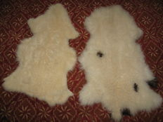 Fine pair of extra large and thick Sheepskins - Ovis aries - 100 x 50cm and 80 x 52cm  (2)