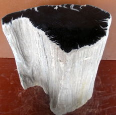 Side table made from trunk of petrified wood - 36 x 29 x 20 cm - 32.4 kg