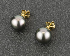 18 kt yellow gold – Earrings – Tahitian pearls measuring 12.00 mm (approx.) – Push back clasp