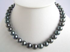 Black Tahitian pearl necklace 10 and 11 mm in diameter - no reserve price