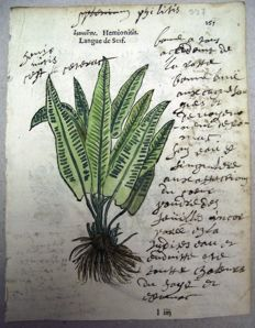 2 botanical prints by Leonhard Fuchs - Heart Fern. Iringium - 1549
