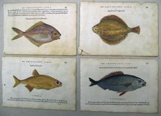 4 woodbock prints by Belon of Fish - 1554