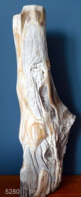 Very beautiful trunk of petrified wood - 700 x 250 mm- 14.8 kg