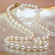 Necklace with Japanese round cultured Akoya pearls, Ø 7.5 x 8 mm – 750 yellow gold clasp