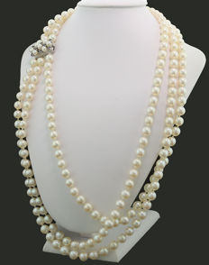 Three row Akoya necklace, white to light pink coloured pearls 7 mm 750 white gold - sapphire clasp ---no reserve price---