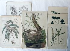 11 Botanical prints by Cornelius Nozeman (1720– 22 July 1786) and various other artists  - Various plants - 18th century