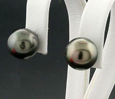 A pair of Tahitian pearl stud earrings, approx. 10.7 mm diameter, 900 platinum --- no reserve ---