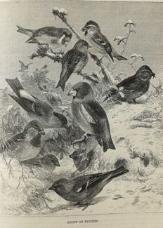 Rev. J. G. Wood - The Illustrated Natural History; Birds - 1875