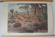 Two school posters - from the Australian animal world -and - On Borneo