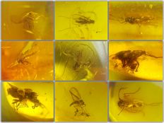 Collection of 9 pieces of amber from the Baltic, with different types of insects - 9-20 mm
