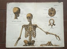 Lot of 5 old anatomy posters of the human body