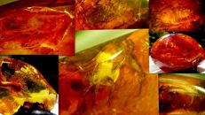 4 beautiful rare inclusion Amber stones - 1.5 - 4cm