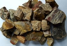 Collection of petrified wood 2400 g - 35 – 90 mm