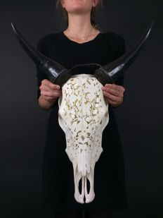 Beautiful Hand-Carved Cow Skull - 58 cm x 44 cm