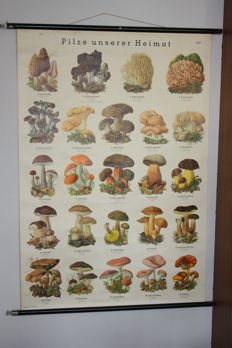 School poster on linen with images of mushrooms