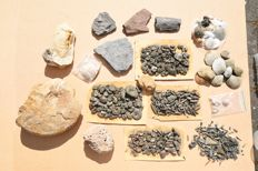 Collection of 300+ fossils - 1–7 cm