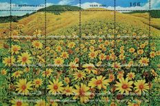 Flora, flowers - collection on album pages
