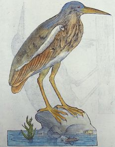 2 large woodcuts on on leaf -Ulisse Aldrovandi (1522 – 1605) - HERONS - 1637