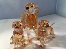 Swarovski - Golden Retriever moeder - Golden Retriever puppy's (2)