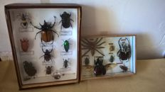 Pair of Insect display cases, various species including Goliath Beetle - 19.5 x 26.5 and 21 x 15cm  (2)