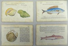 4 woodbock prints by Belon of Fish and Shells - 1554