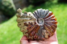 Carved ammonite entirely in calcite - superb condition - 127 x 101 mm - 412 g