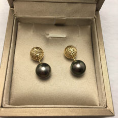 Tahitian black pearls, 18K gold earrings. Pearl diameter 11 mm. Kim diameter: 10 mm.