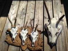 Unusual, vintage hand-crafted wall-plaque, Roebuck triple trophy , and Red Deer first pointer - 30 x 45cm and 30cm  (2)