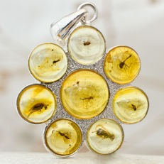 Lovely sterling silver and Baltic amber pendant with 8 fossil insects - 32 x 23 x 5 mm, 3.5 g