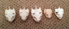 Small collection of various Turtle skulls - 30 to 45mm (5)