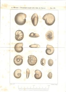Lot of 6 lithographs of fossils - 21.3 x 29.5 cm