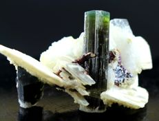 Unique Piece Of Undamaged & Self Standing Tourmaline Crystals with Rare Tantalite on Matrix - 29 x 44x 21mm - 19gm - 96cts