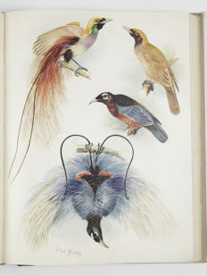 Tom Iredale - Birds of Paradise and Bower Birds - 1950