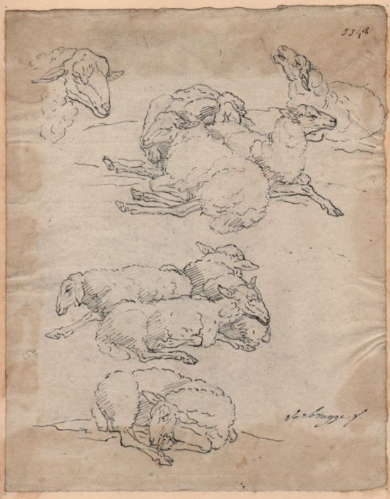 Gijsbert Andriesz Verbrugge (1633-1730) Possibly -  Signed drawing of a study of sheep - with collection stamp