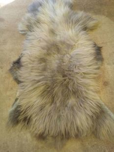 Pair of extra large, thick Sheepskins - Ovis aries - 120 x 90cm and 115 x 85cm  (2)