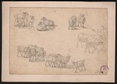 Paulus Potter ( 1625 - 1654) attributed or follower -  Signed drawing of several group of sheep - with collection stamp