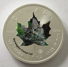 Canada - 5 dollars 2017 'Cute Kittens - Norwegian Forest Cat' - coloured edition - 1 oz silver